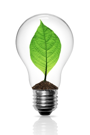 Leaves grow in a light bulb photo