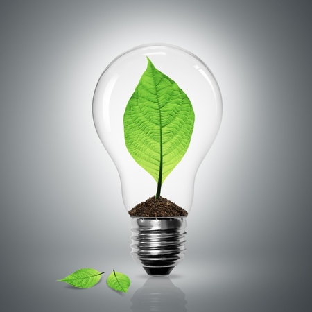 Leaves grow in a light bulb on gray background  photo