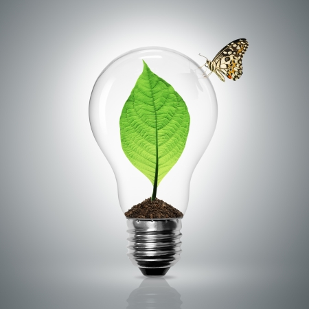 Leaves grow in a light bulb have butterfly Stock Photo - 10989312