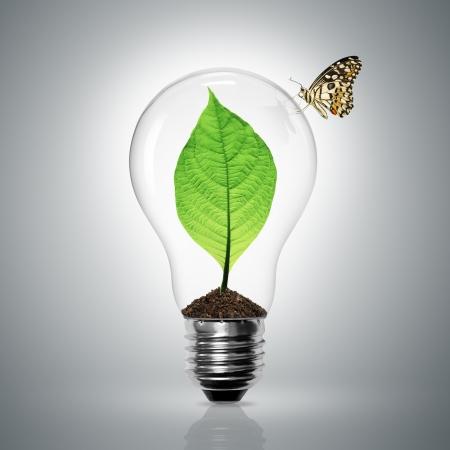 ampoule: Les feuilles poussent dans une ampoule de lumi�re ont papillon