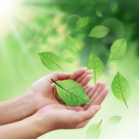 organic concept: Care leaves with your hands in the world