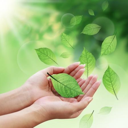 el mundo en tus manos: Cuidado de las hojas con las manos en el mundo Foto de archivo