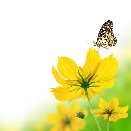 tekening vlinder: Mooie gele bloemen en vlinder