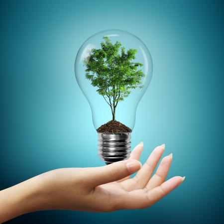 technological: Bulb light with tree inside on woman hand Stock Photo