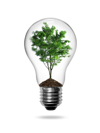 Bulb light with green tree inside isolated on white background photo