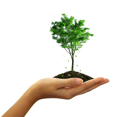 Growing green tree plant in a hand isolated on white background photo