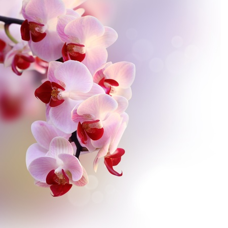 orchid branch: Beautiful orchid