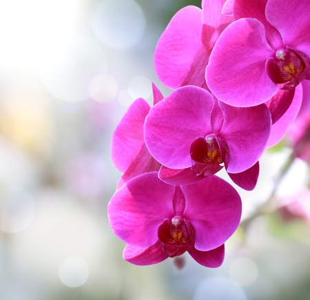 light meal: Beautiful orchid purple and pink greeting cards Stock Photo