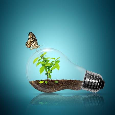 �cologie: Ampoule avec un arbre � l'int�rieur ont papillon sur fond bleu Banque d'images