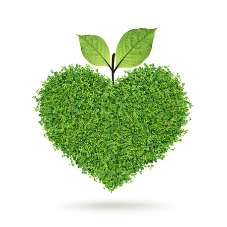 Small green plants heart and leaf in the happy Valentine