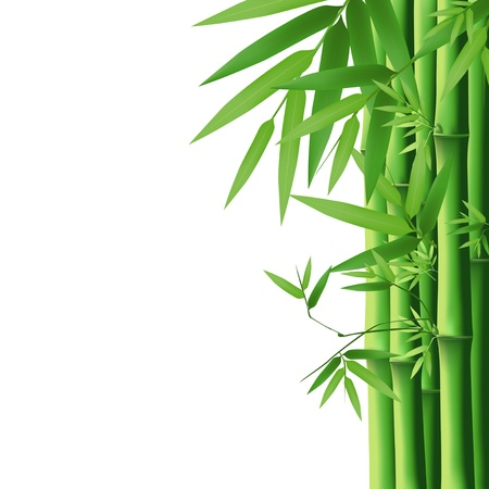 yellow china: Bamboo green leaf, vector illustration  Illustration