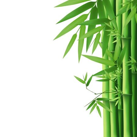 japones bambu: El bamb� verde hoja, ilustraci�n vectorial Vectores