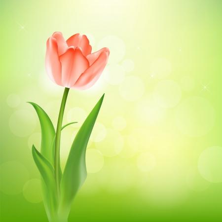 Beautiful tulips on nature background illustration Vector