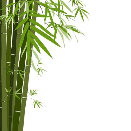 guadua: Bamb�, ilustraci�n vectorial
