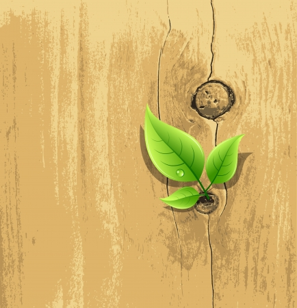 Green Leaf on old wood wallpaper background, vector  Vector