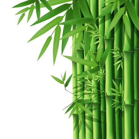bamboo leaves: Bamboo, illustration