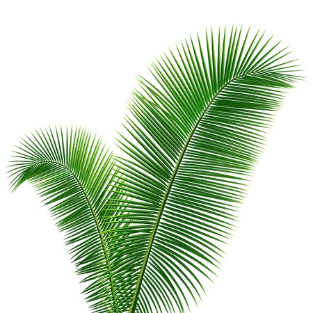 frond: Coconut leaves design background