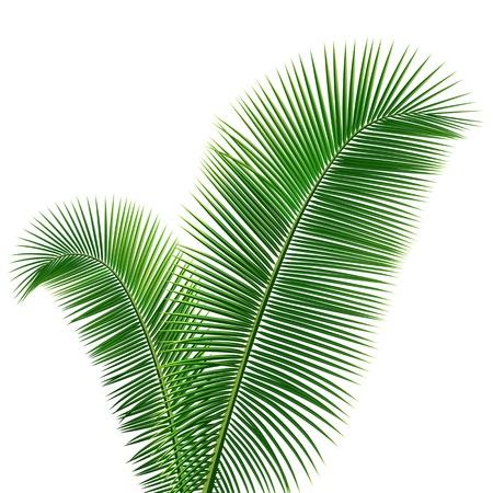 buisson: Feuilles de cocotier fond de conception Illustration