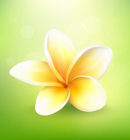 Plumeria flower on nature background Illustration