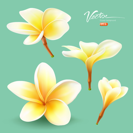 Frangipani, thailand flower collections design Vector