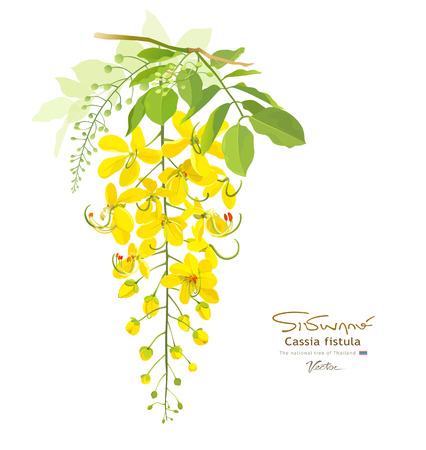 amarillo: Flor nacional de Tailandia Cassia Fístula
