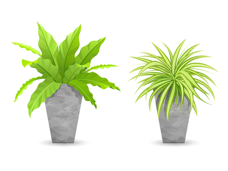 Tropical tree in cement pots collections, vector illustration Illustration