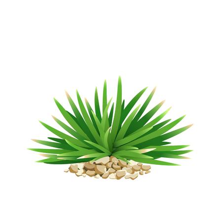 grass close up: Vector Mini Mondo Grass, with small stone, front view