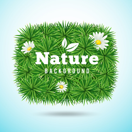 Vector green grass and flower, nature concept design background Illustration