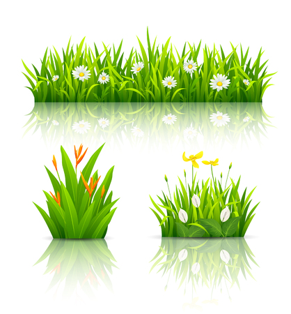 Beautiful flowers with green leaves collections
