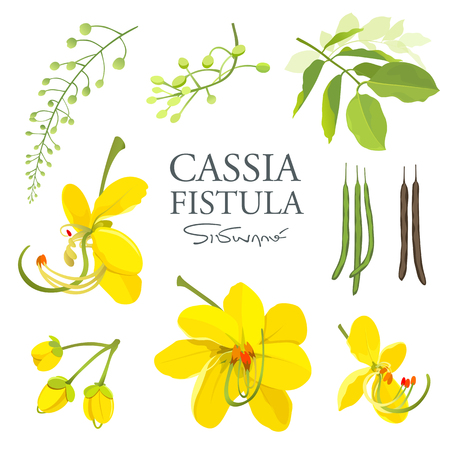 National flower of Thailand, Cassia Fistula, beautiful Yellow Thai flower collections