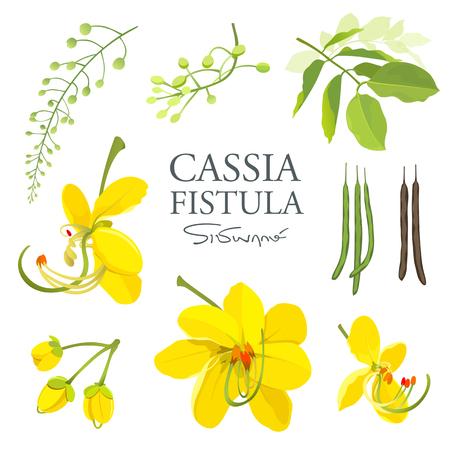 National flower of Thailand, Cassia Fistula, beautiful Yellow Thai flower collections Banco de Imagens - 95153132