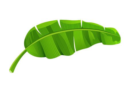 Banana leaves Imagens - 123371106