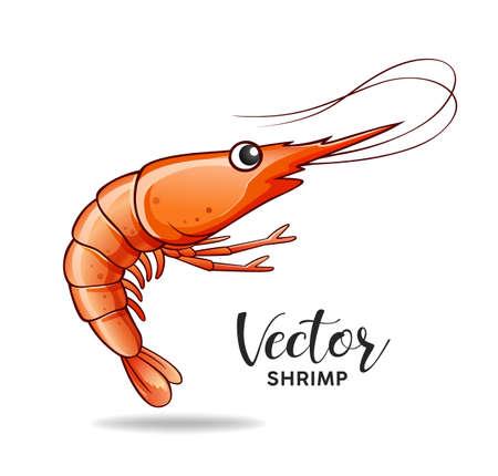 Shrimp design, vector isolated on white background, illustration