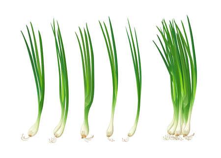 Spring onions realistic fresh, isolated on white background, vector illustration Ilustração