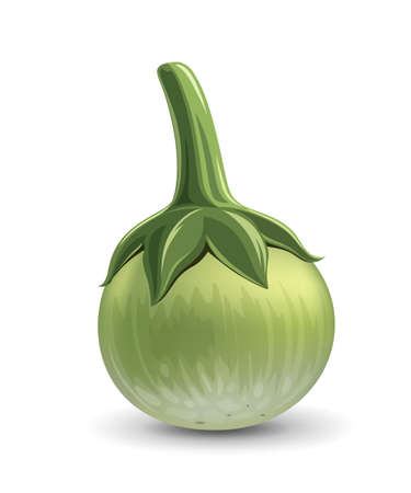 Thai eggplant green fresh realistic design, isolated on white background, Eps 10 vector