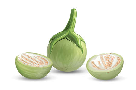 Eggplant vector green fresh, and cut half realistic design, isolated on white background, Eps 10 vector