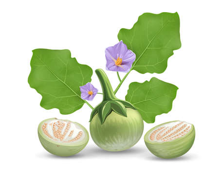 Eggplant vector, leave and purple flower, eggplant cut half realistic design, isolated on white background, Eps 10 vector