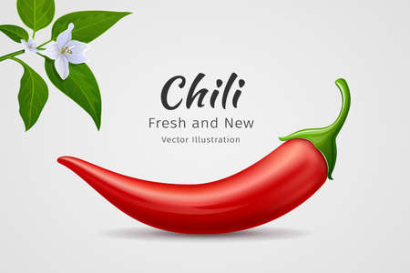 Chili peppers red fresh with leaves and flower chili realistic design, on gray background, Eps 10 vector illustration
