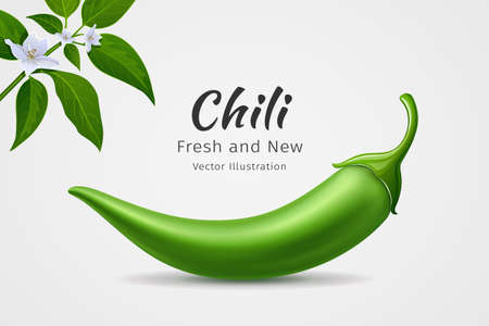 Chili peppers green fresh with leaves and flower chili realistic design, on white background, Eps 10 vector illustration