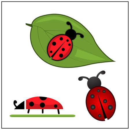 Ladybug insect icons set, Vector Illustration. Ladybug and leaf.