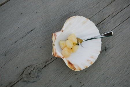 scallop shell: Delicious sea scallop served on a scallop shell on wooden background Stock Photo