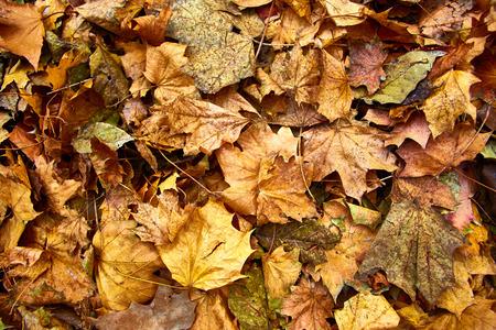 dode bladeren: Dode bladeren geschoten ideaal voor achtergronden en patronen