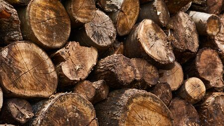 kindling: Firewood. Dry firewood in a pile for furnace kindling Stock Photo