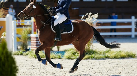 Rider on bay horse in competitions. Jumping show Stock Photo
