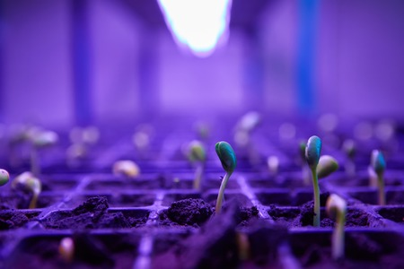Green sprout growing from seed in square boxes. Symbol of new life Reklamní fotografie