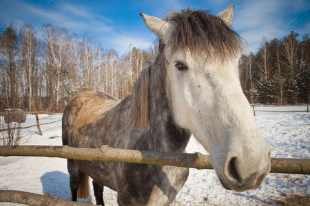 beautiful horse on a background of a winter landscape. Stok Fotoğraf