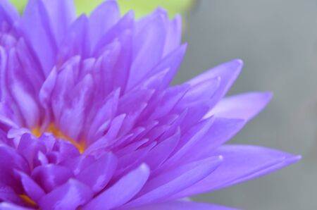 water flower: water flower