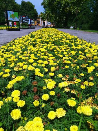 bright: Beautiful yellow flowers on a bright, sunny day