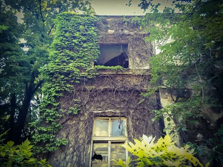 broken house: Old haunted house with broken windows, ivy, plants and trees