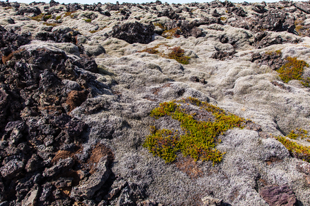 lava field: Moss covered lava field - Iceland